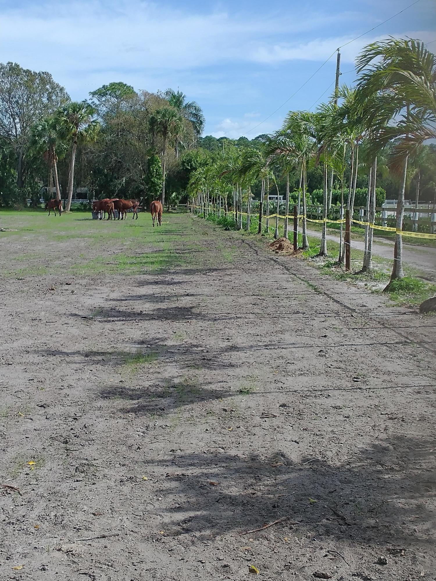 1100 horses along easement