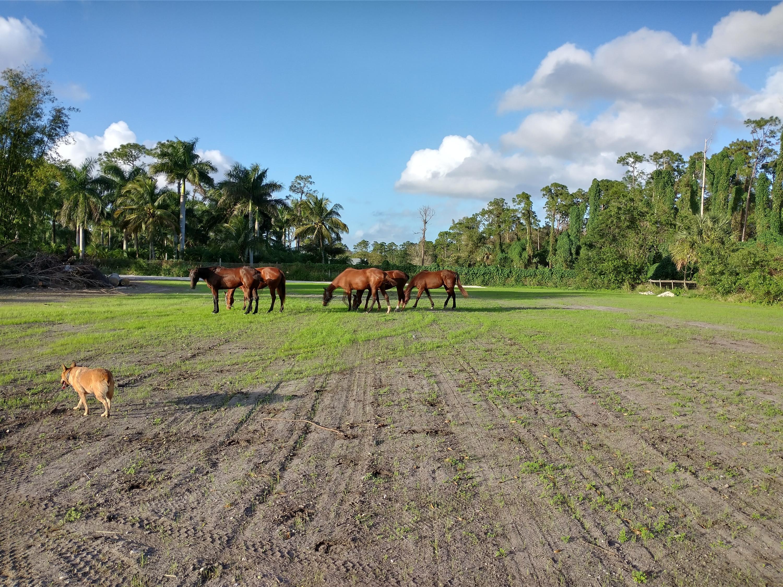 1100 horses 5 poppy