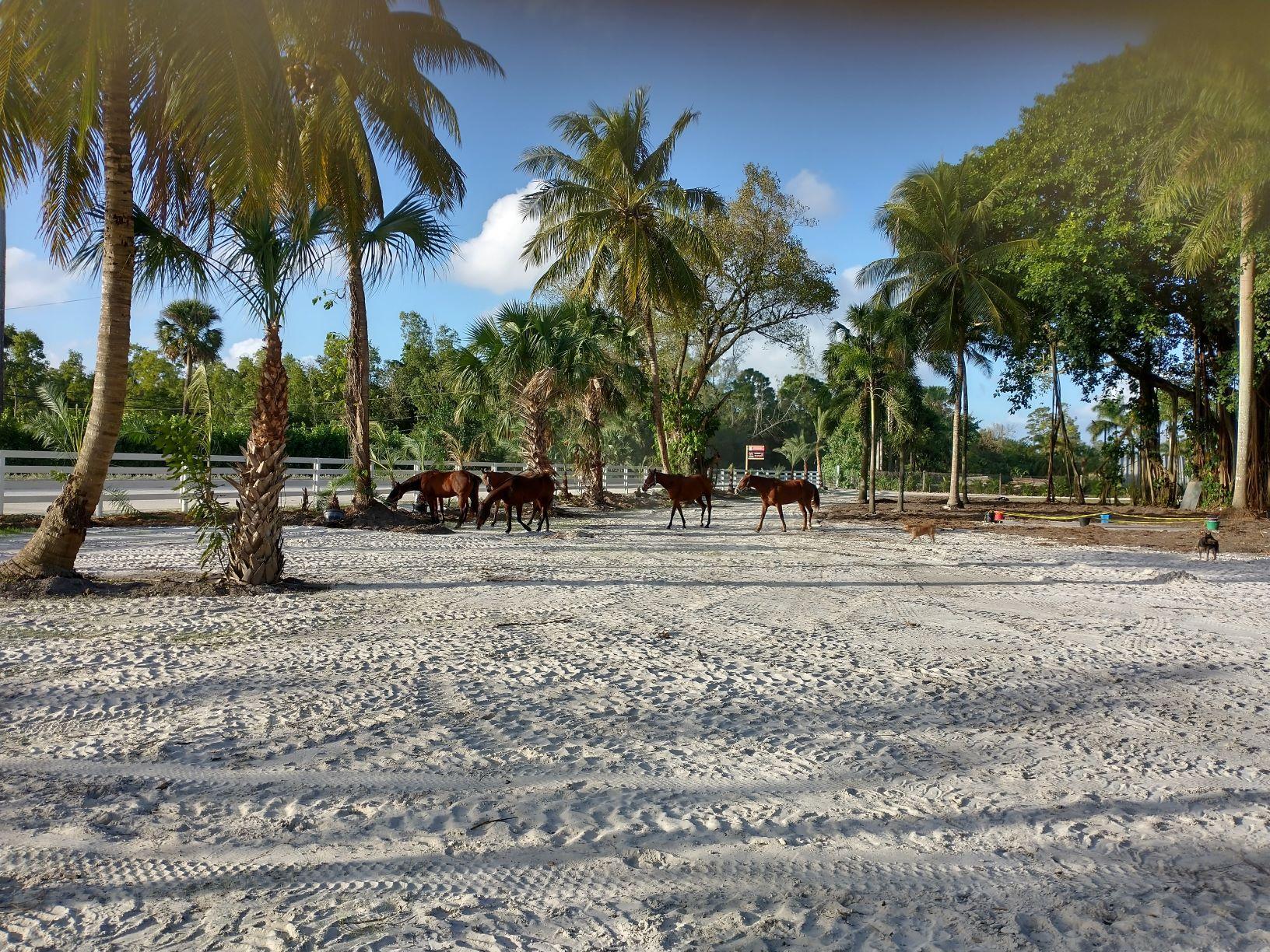 1100 horses for Ag Classification MEDIUM