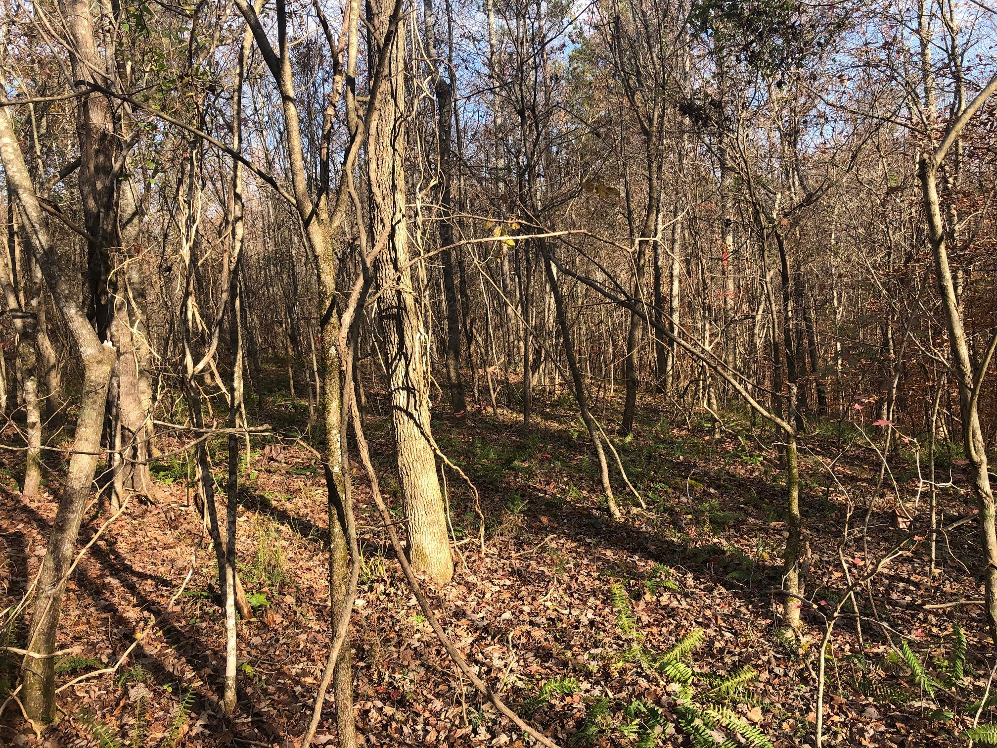 9 Allen Bend Road, Out of State, Out of State 00000, ,Land,For Sale,Allen Bend,RX-10685452