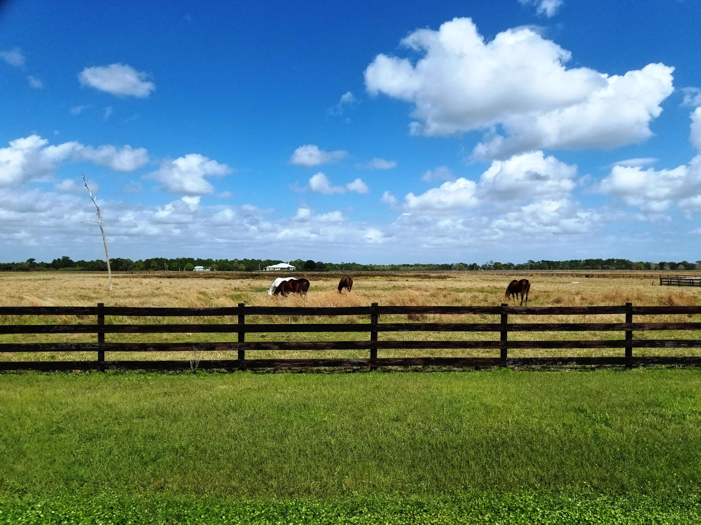 MCR horses