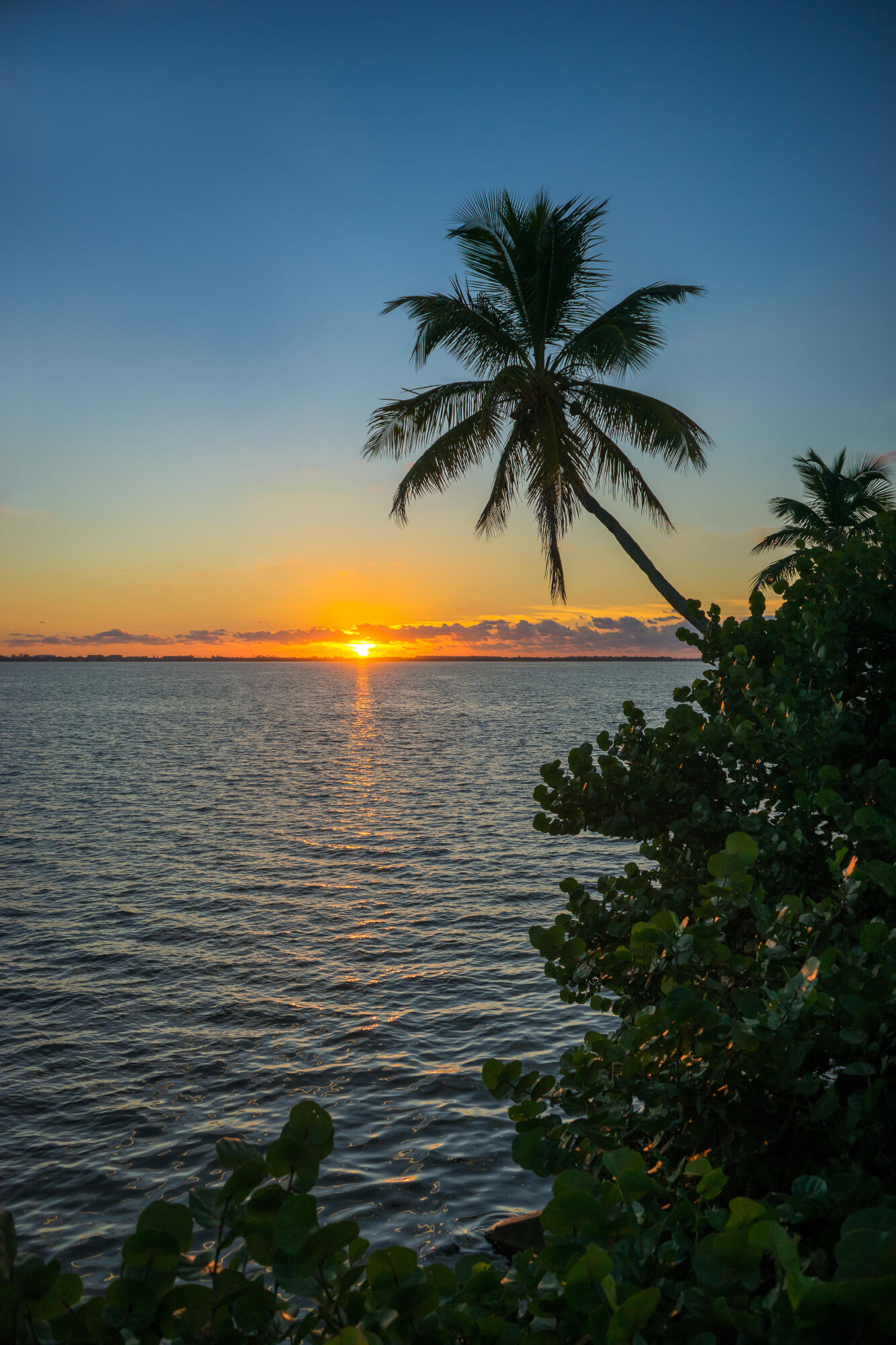 x174x-Coconut-Tree-Over-Indian-River-Lag