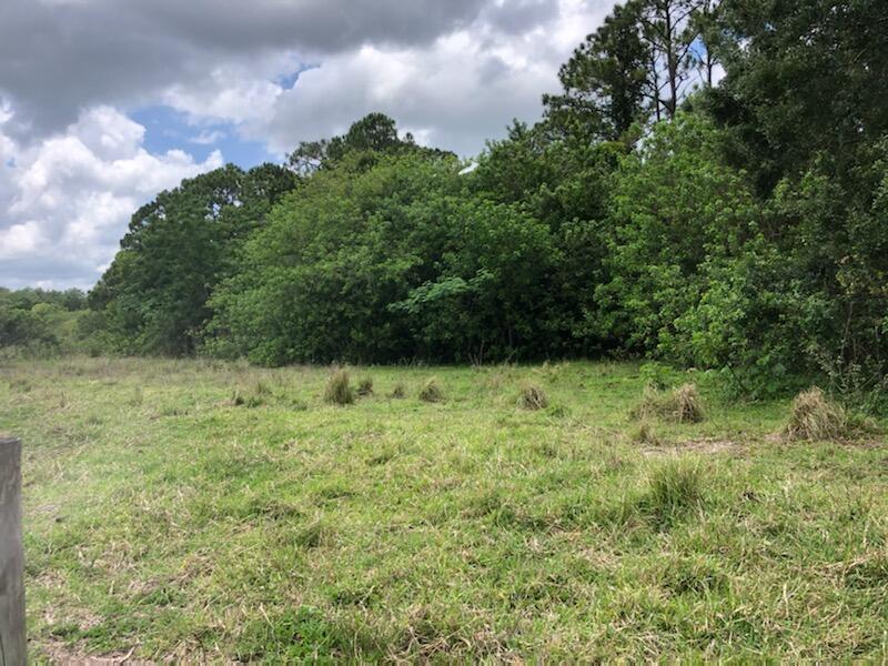 NE 133rd Ln Okee grass and trees