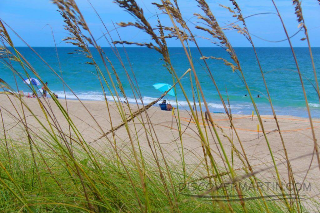 stuart-beach-seagrass-1024x683