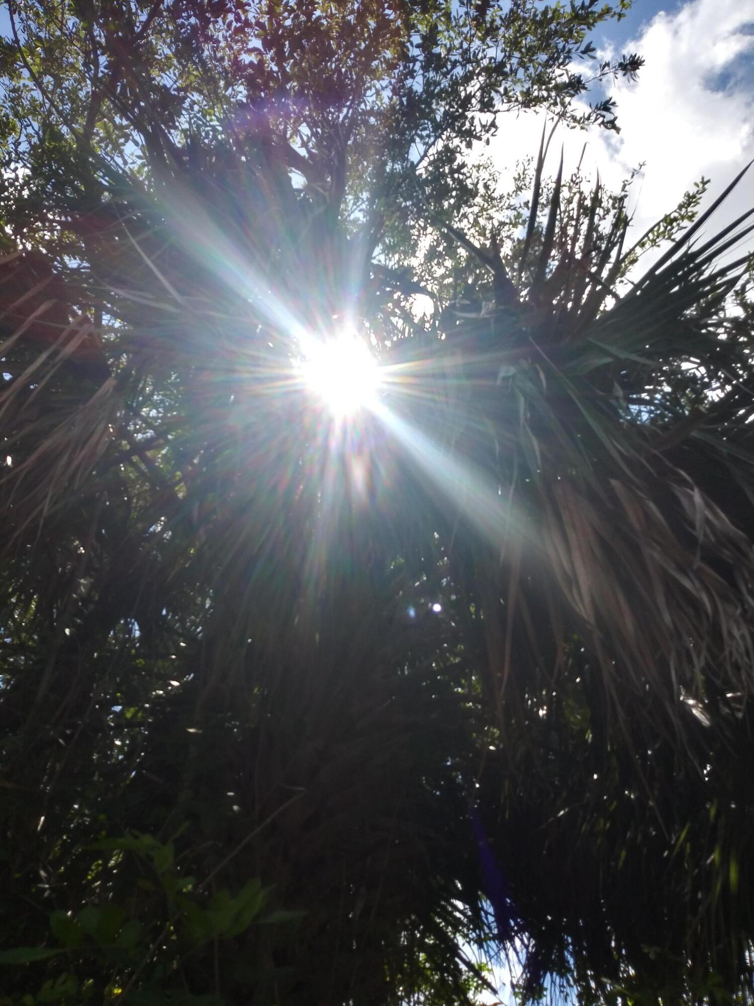 Sunshine Sparkle