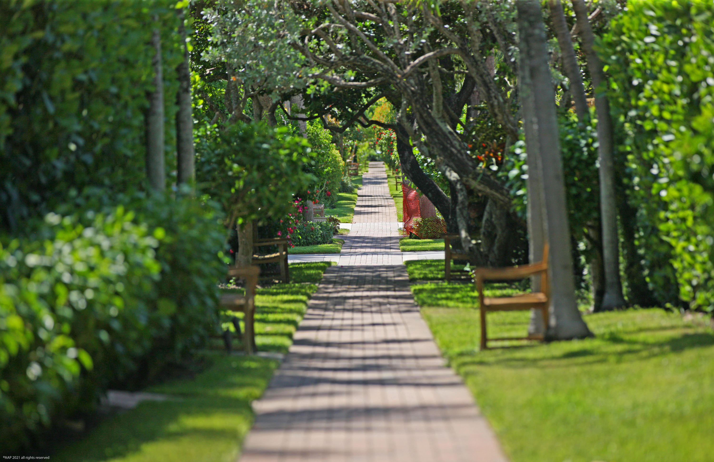 Jupiter Inlet Colony beach path AAP 2021