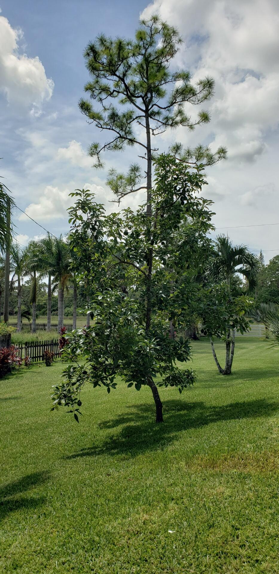 4302 130th Avenue Royal Palm Beach, FL 33411 photo 37