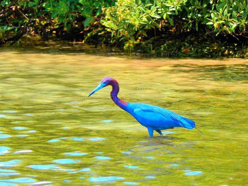 birds-wildlife-southern-florida-port-cha