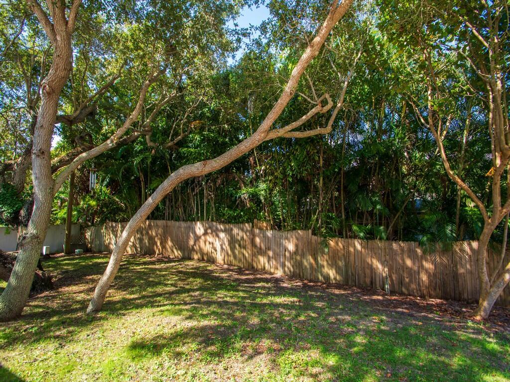 back yard oak 1