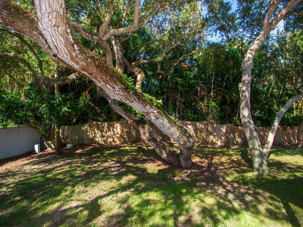 back yard oak