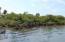 Mangrove Fringe