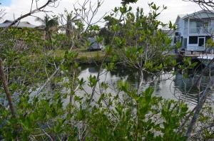 Hawksbill Lane, Sugarloaf Key, FL 33042
