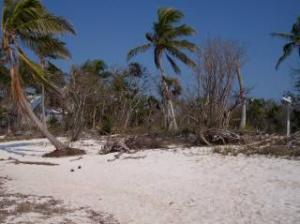 Lot 5W Cook Island, Big Pine Key, FL 33043