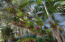 Orchids, Staghorn Ferns & Bromeliads Collection