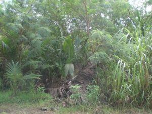 San Roke Dr., Barrigada, GU 96913