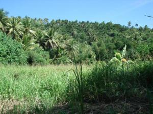 Laguina Estates, Yona, GU 96915