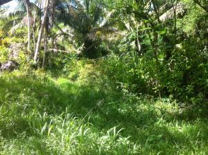 Pulantat Sereno Road, Yona, GU 96915