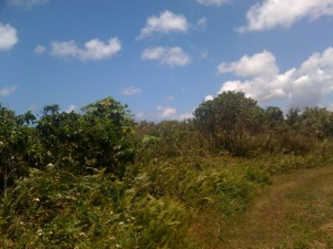 Route 3, NCSTAMS, Dededo, Guam 96929