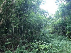 Chalan Paharu, Yigo, Guam 96929