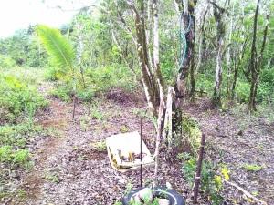 Lot 10083-7-2-R1, Chalan Bada, Dededo, Guam 96929