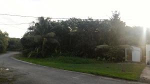 Flores Rosa, Windward Hill 3, Yona, GU 96915