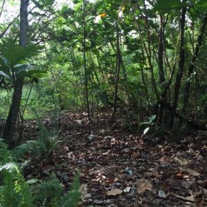 Marbo Cave Road, Barrigada, GU 96913