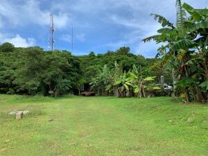 Areca Palm/Achu Mali St., Mangilao, GU 96913