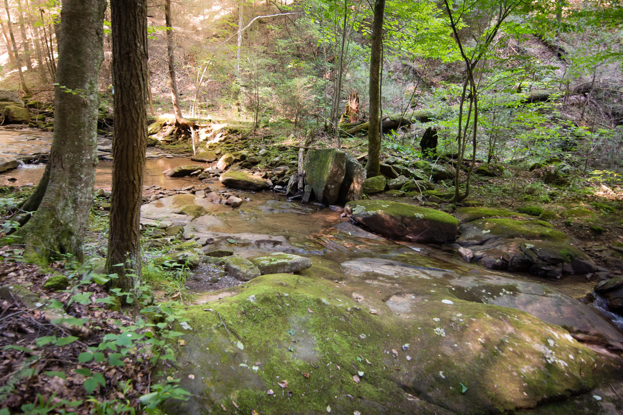 Image 56 For 74 Log Cabin