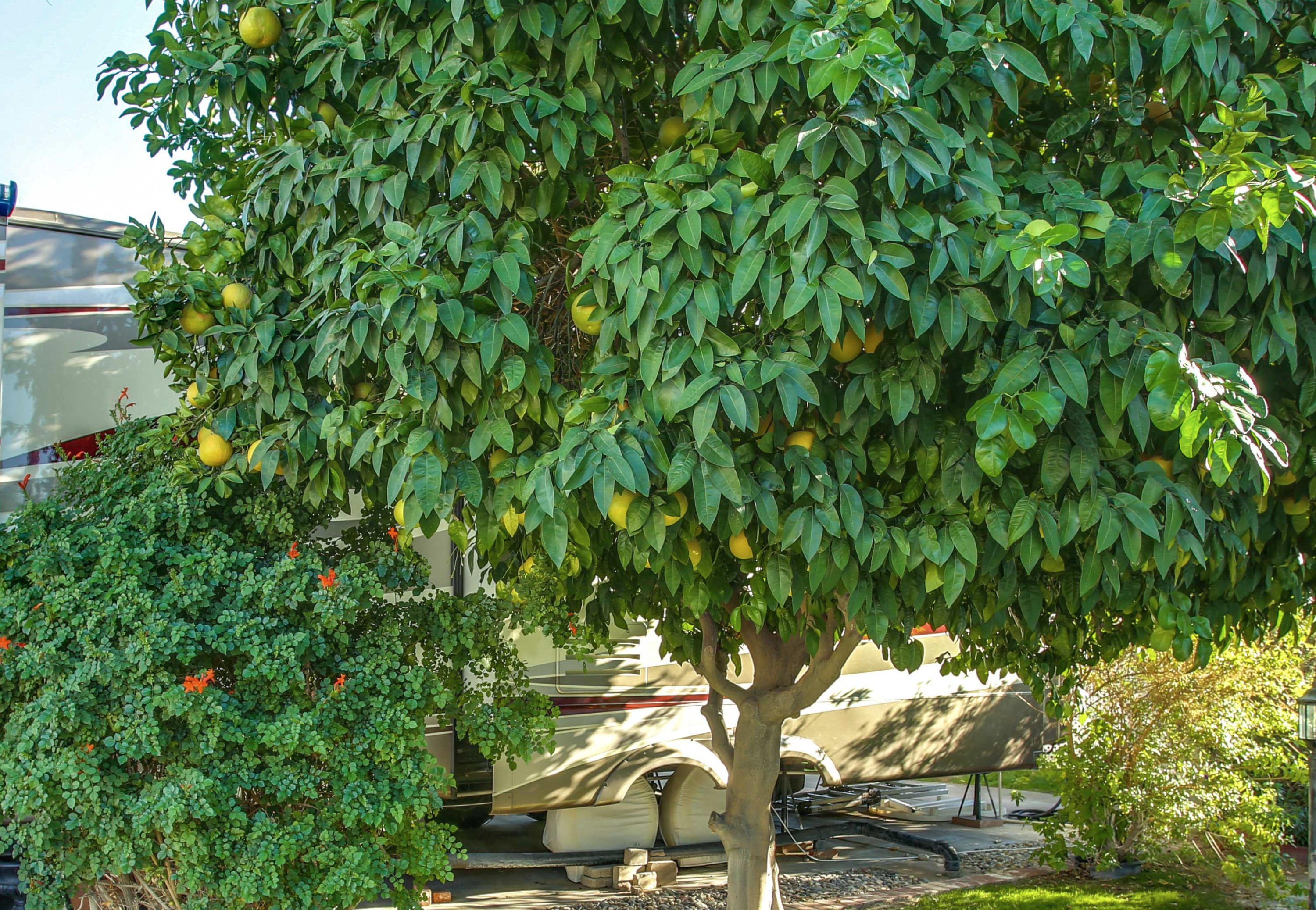 69411 Ramon Road, Cathedral City, California 92234, ,Land,For Sale,69411 Ramon Road,219033649