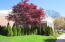 Enjoy this Japanese Maple from your Living Room window