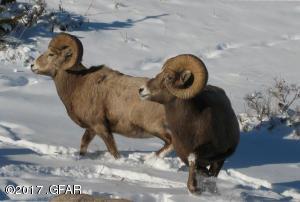 9 FCGR 2012 Bighorn