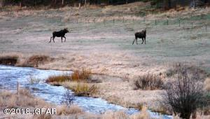 Upper Willow Creek moose