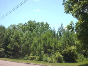 Lot #7 Herman Shirley S/D, West Point, MS 39773