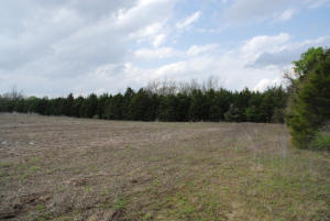 7 Cleared and Wooded Land