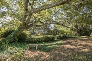6 bench w tree