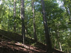 Firetower Rd, West Point, MS 39773