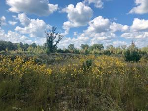 Self Creek, Starkville, MS 39759