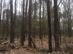 Kings Arms Rd, Lot 44, Starkville, MS 39759
