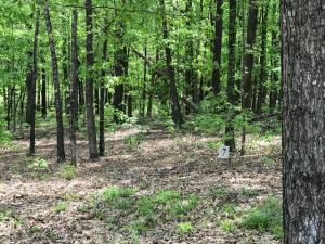 Champs Way (Lot 7), Starkville, MS 39759