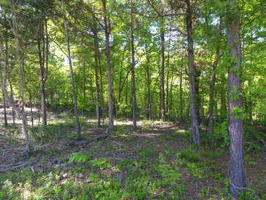 Lakes Blvd, Lot 2, Starkville, MS 39759