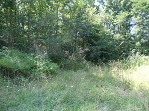 WILDWOOD AVENUE, LEWISBURG, WV 24901