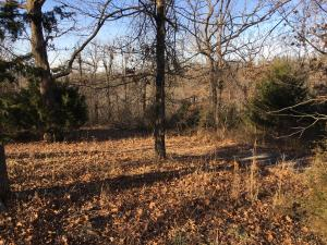 Lot 9 Cedarwood, Omaha, AR 72662