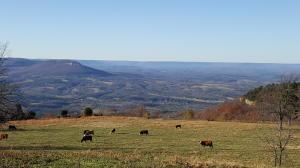 13128 AR 123 Hwy, Mount Judea, AR 72655
