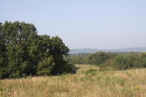 CR 807, Green Forest, AR 72638