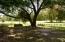 Huge live oak. Inviting swing.