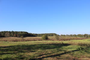 46 Acres Hwy 42, Sumrall, MS 39482