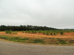 00001 Max White Rd., Purvis, MS 39475