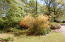 Native azalea shrub