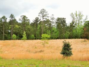 000 Purvis to Brooklyn Rd., Purvis, MS 39475