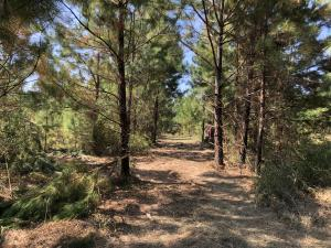 5.76 Acres Turkey Pine Dr., Hattiesburg, MS 39401